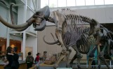 mammoth mastadon