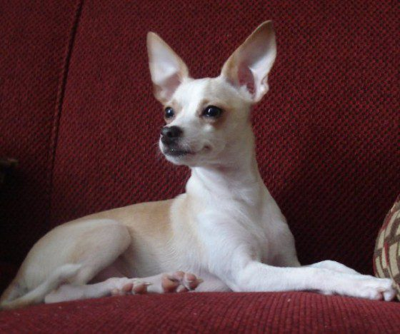 Ancient Chihuahuas in Southeastern U.S.? | LostWorlds.org - Page 3