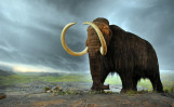 A woolly mammoth reconstruction in the Royal BC Museum, CanadaFlying Puffin, Wikimedia.org