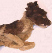 native american dog burials in american southwest New Mexico