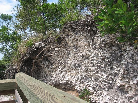 Edisto Beach Shell Mound